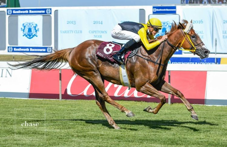 Star mare Queen Supreme to be aimed at Breeders' Cup